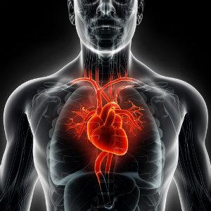 Cardiac-1.jpg