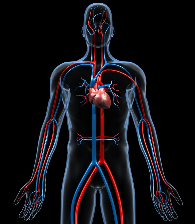 Cardiovascular_HiRes.jpg