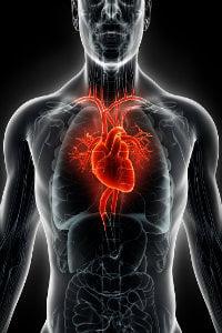 left internal mammary artery