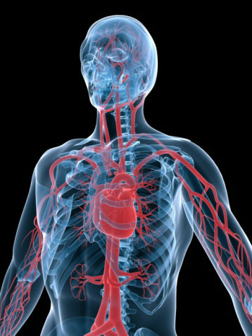 11 Fascinating Blood Flow Facts from the Human Body